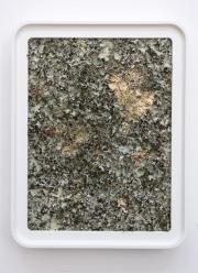 Lichen Square