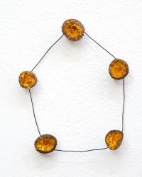 Acorn Marigold